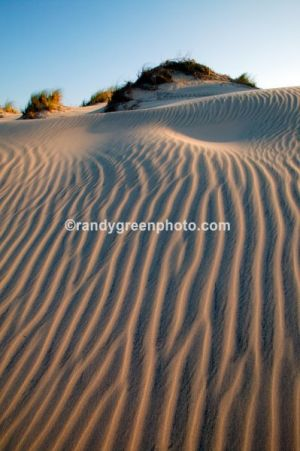 Sand dunes along South Padre Island, Texas.